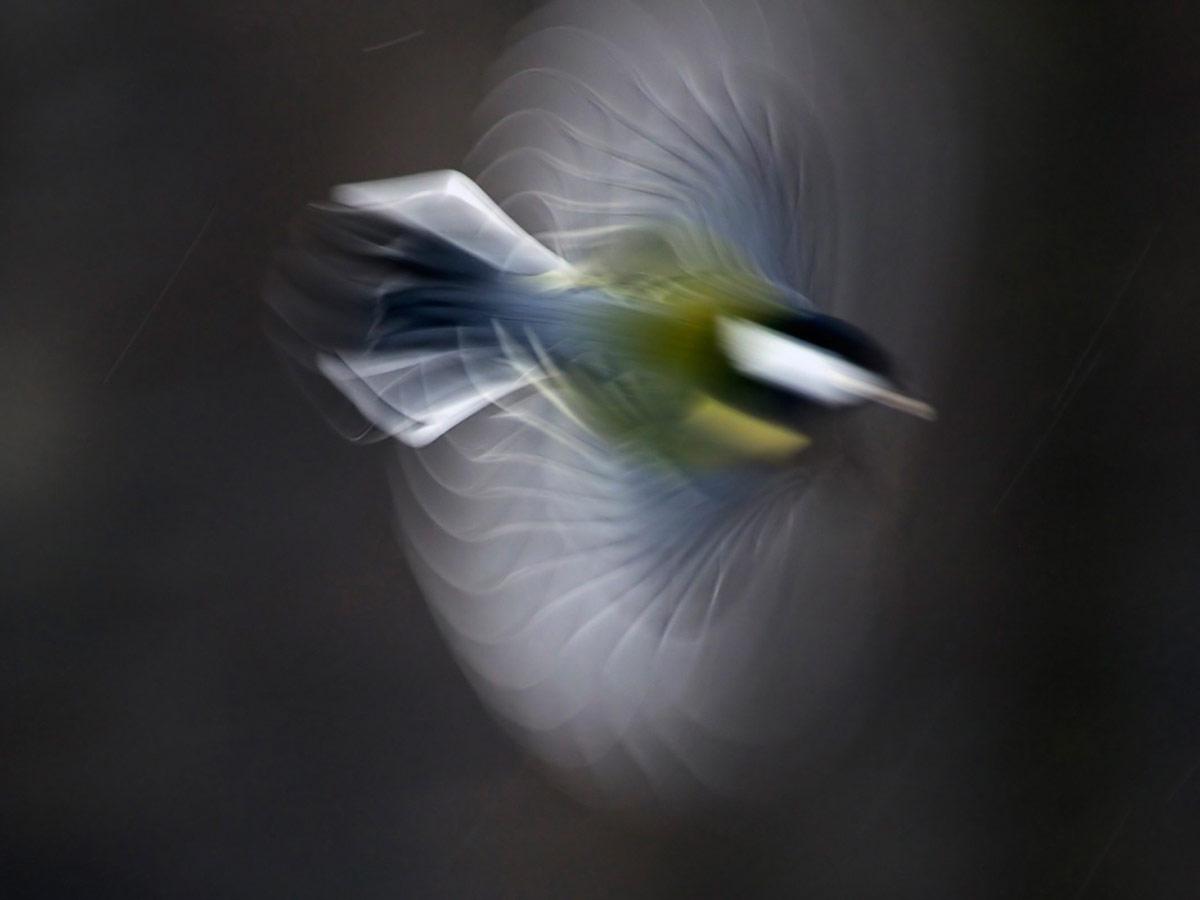 Ротор, © Виктор Тяхт