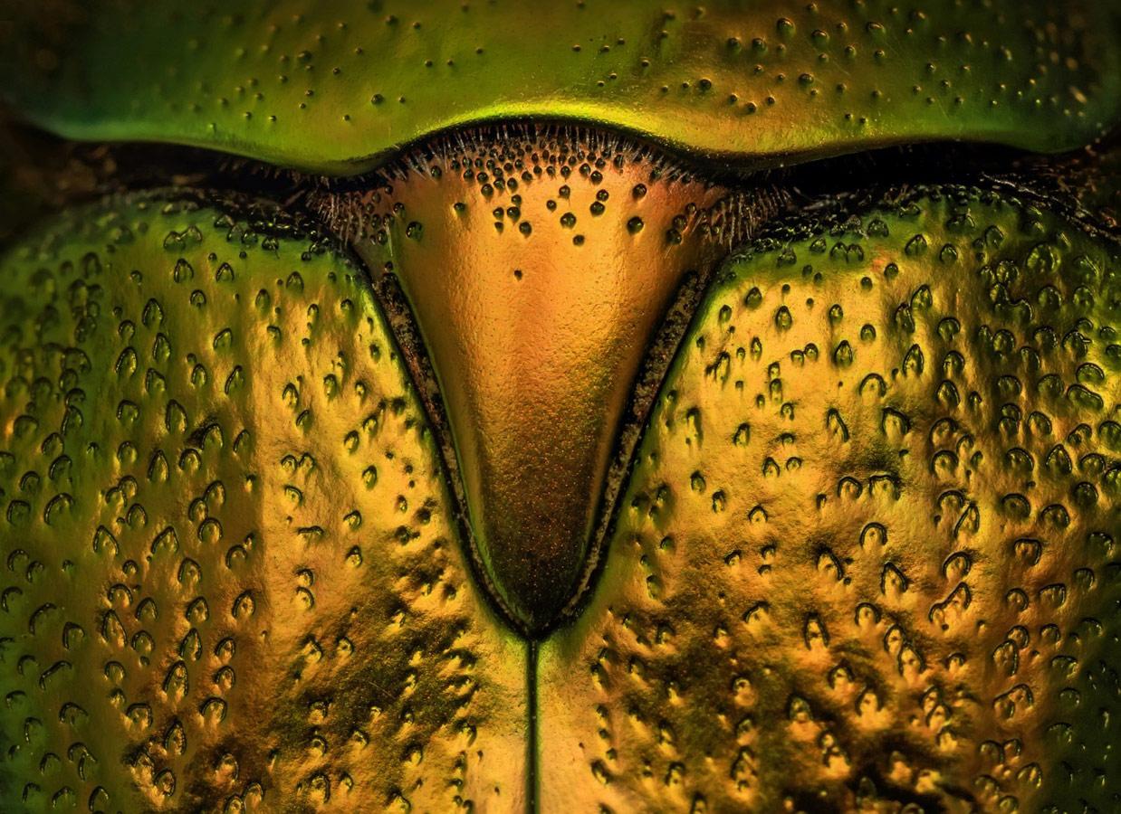 Золотой телец, © Валерия Зверева