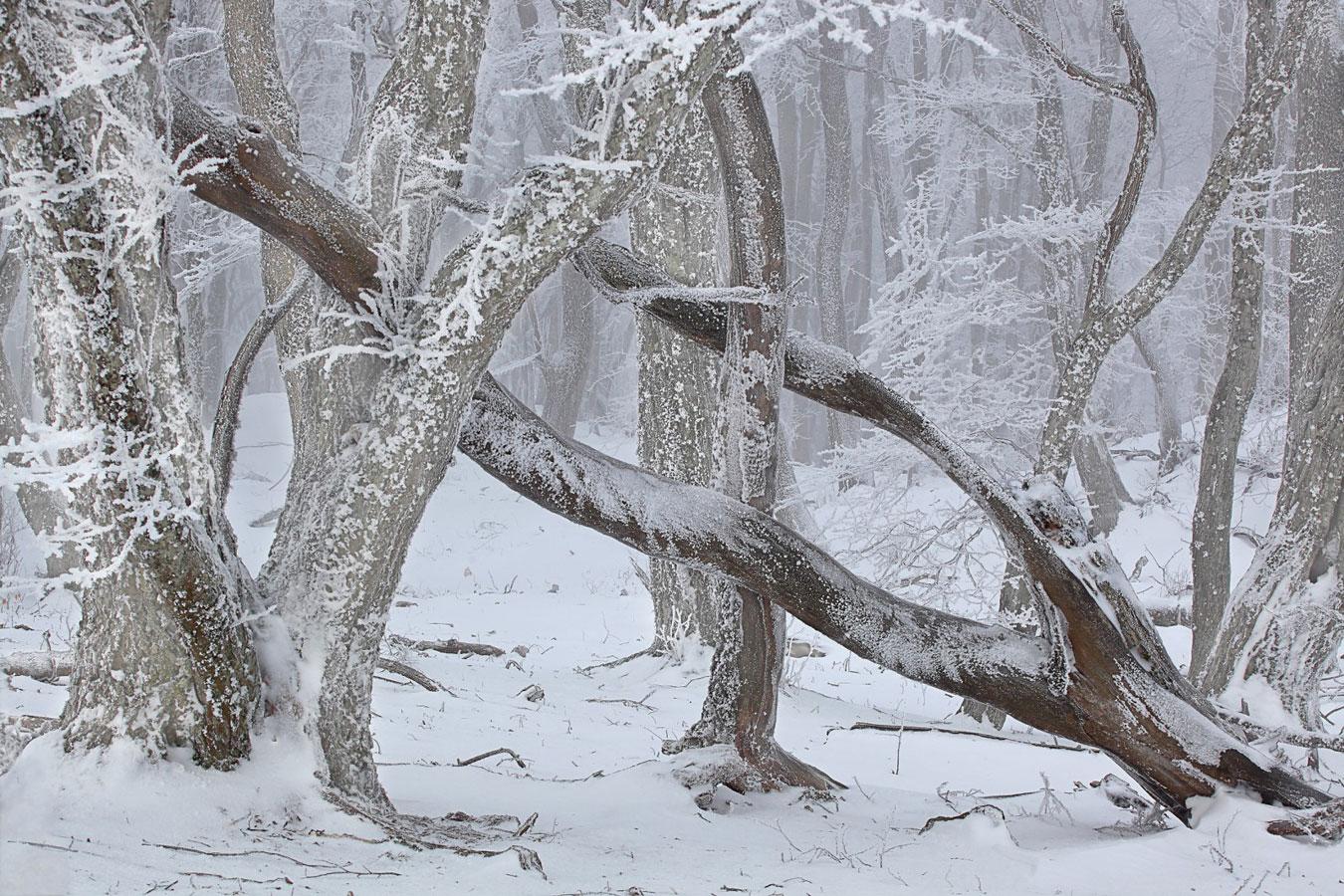 Бурелом, © Александр Гущин, Финалисты конкурса «Самая красивая страна – 2019»
