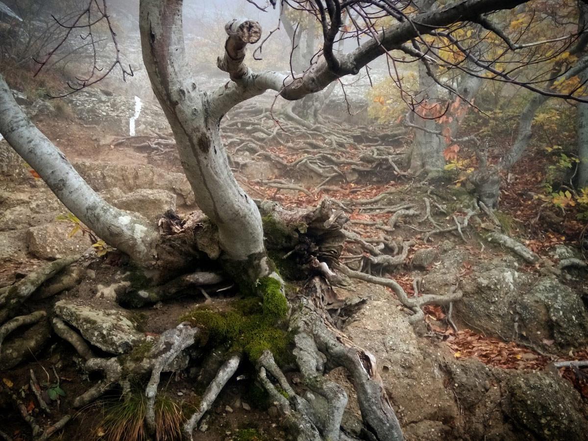 Сказочный лес, © Юлия Назаренко