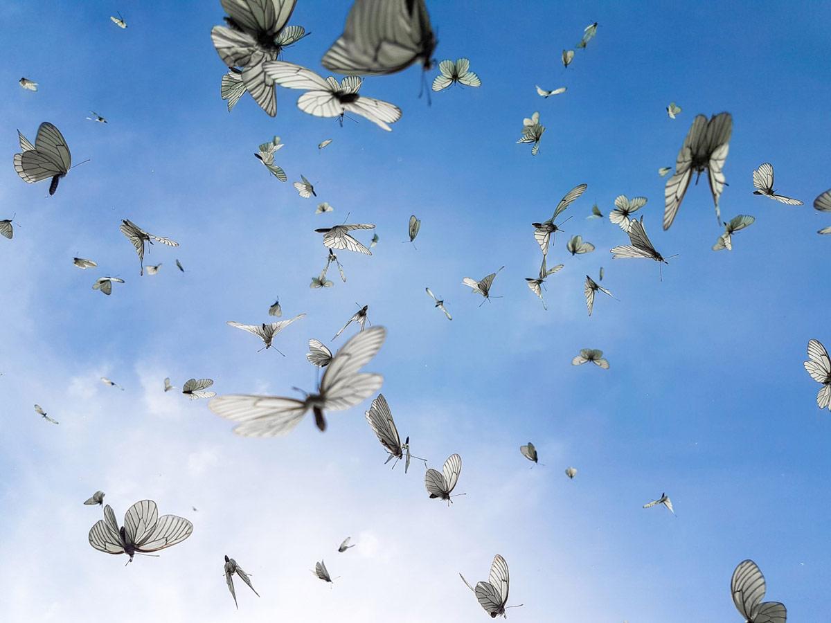 Вспорхнувшие в небо цветки, © Александр Баранов