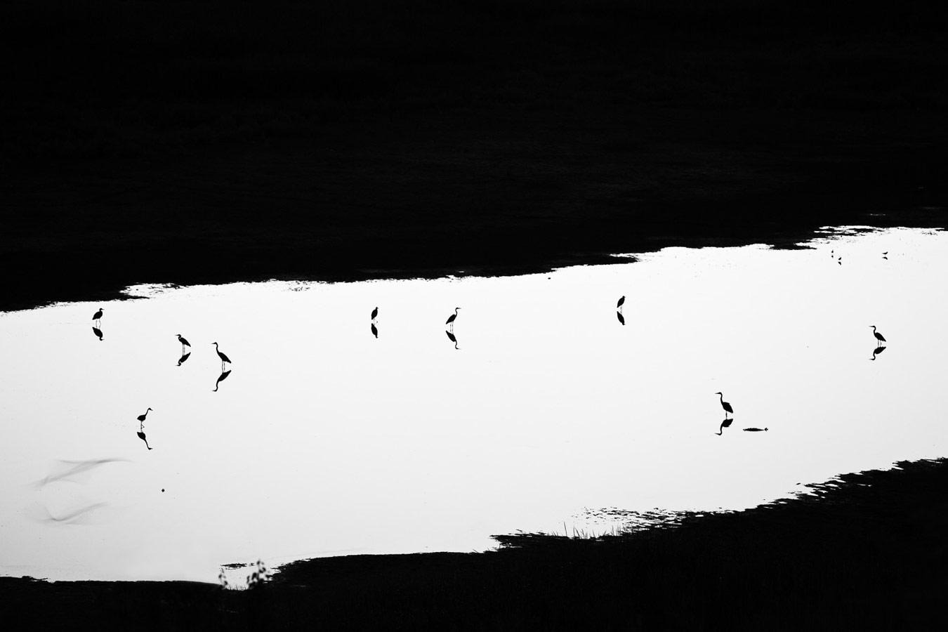 В сумерках, © Юрий Сорокин