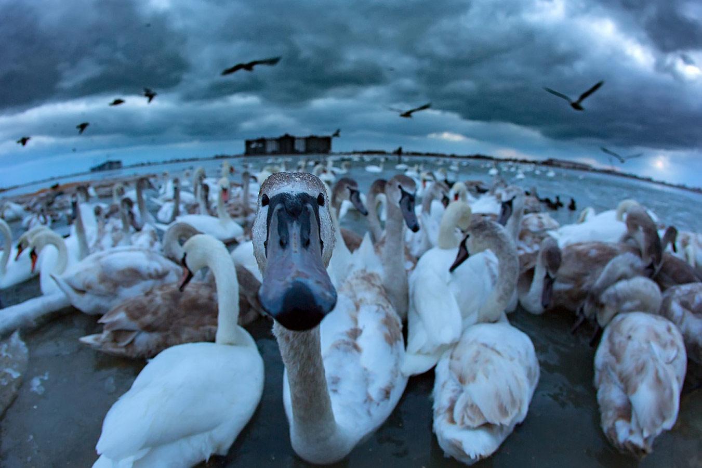 Лебединое озеро. Зима, © Андрей Сидоров