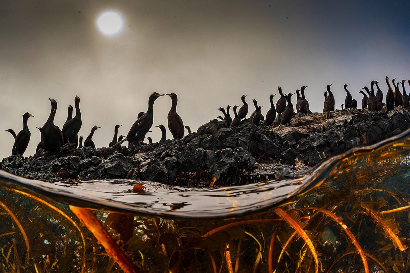 Свидание в толпе, © Андрей Сидоров