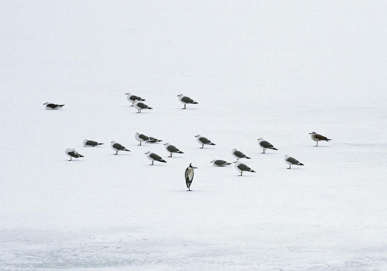 В ожидании весны, © Антон Воронин