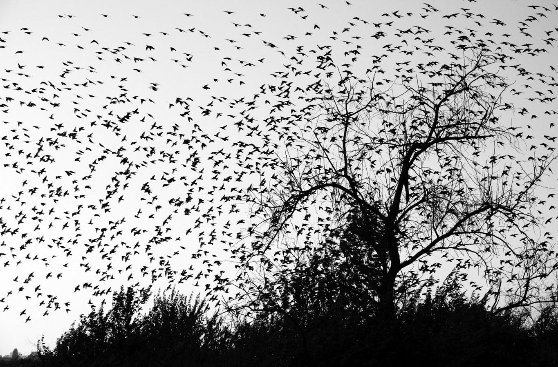 Птицы, © Надежда Муравьева