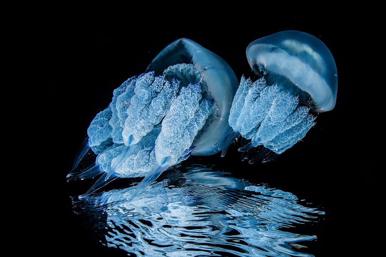Парное катание, © Андрей Сидоров
