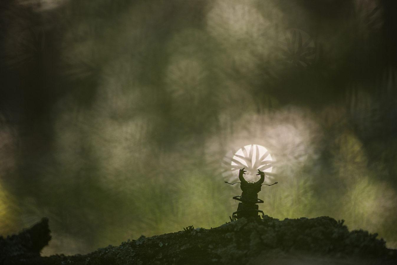 Великий Ра, © Геннадий Мещеряков