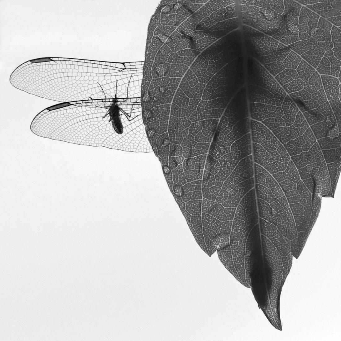 Мимикрия, © Антон Воронин