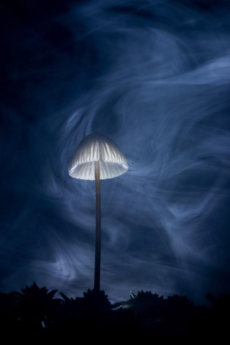 В тумане, © Андрей Кузнецов
