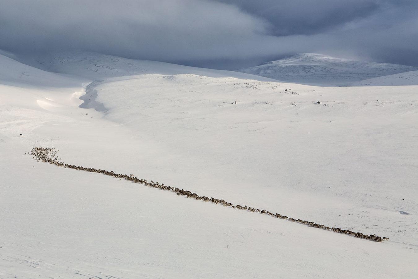 Исход стада, © Сергей Карпухин