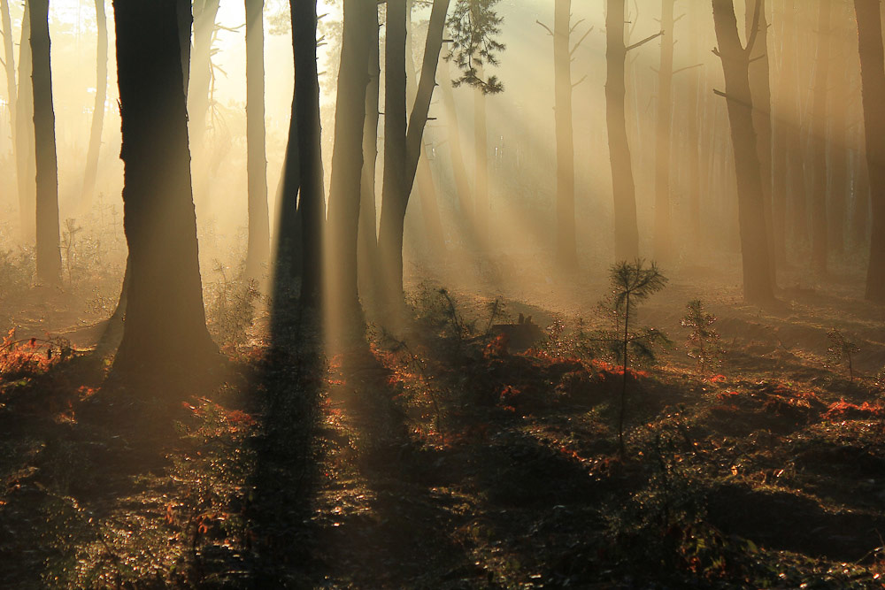 В утренних лучах, © Андрушко Валерий, Фотоконкурс «Стихии науки»