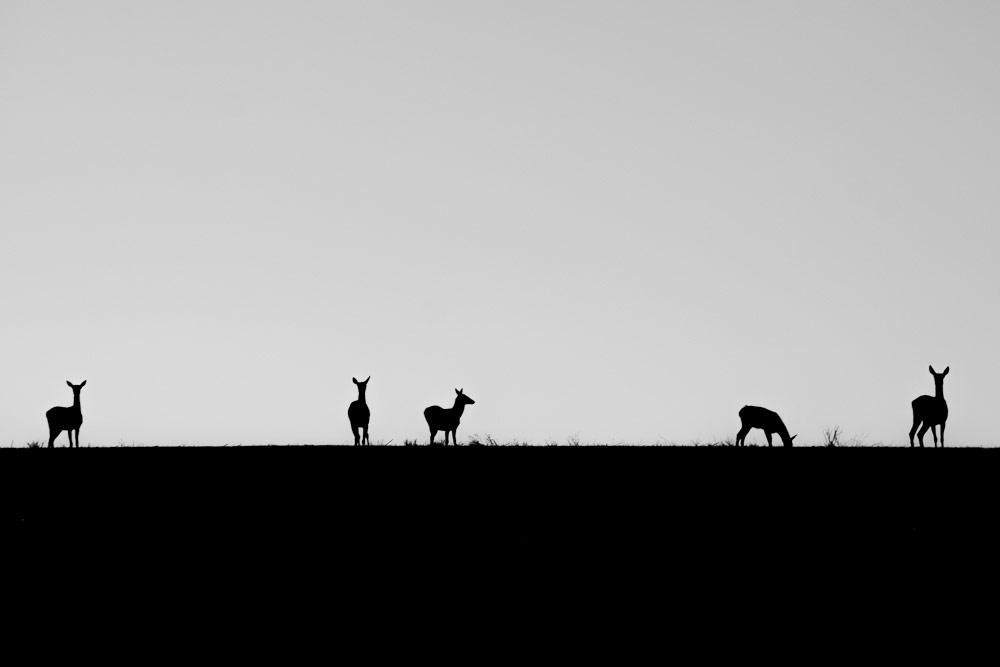 Командное наблюдение, © Сергей Цветков, Фотоконкурс «Стихии науки»