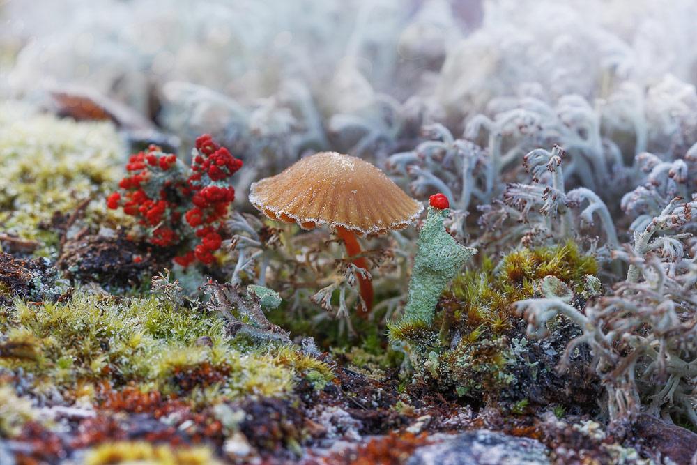 Сентябрь на Кольском, © Колесников Владимир, Фотоконкурс «Стихии науки»