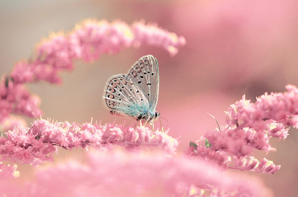 Розовая нежность, © Митрофанова Елизавета, Фотоконкурс «Стихии науки»
