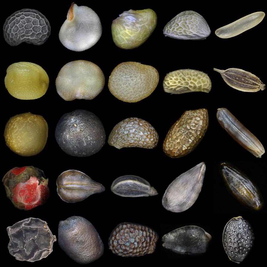 Разнообразие семян в природе, © Клепнев Александр, Фотоконкурс «Стихии науки»