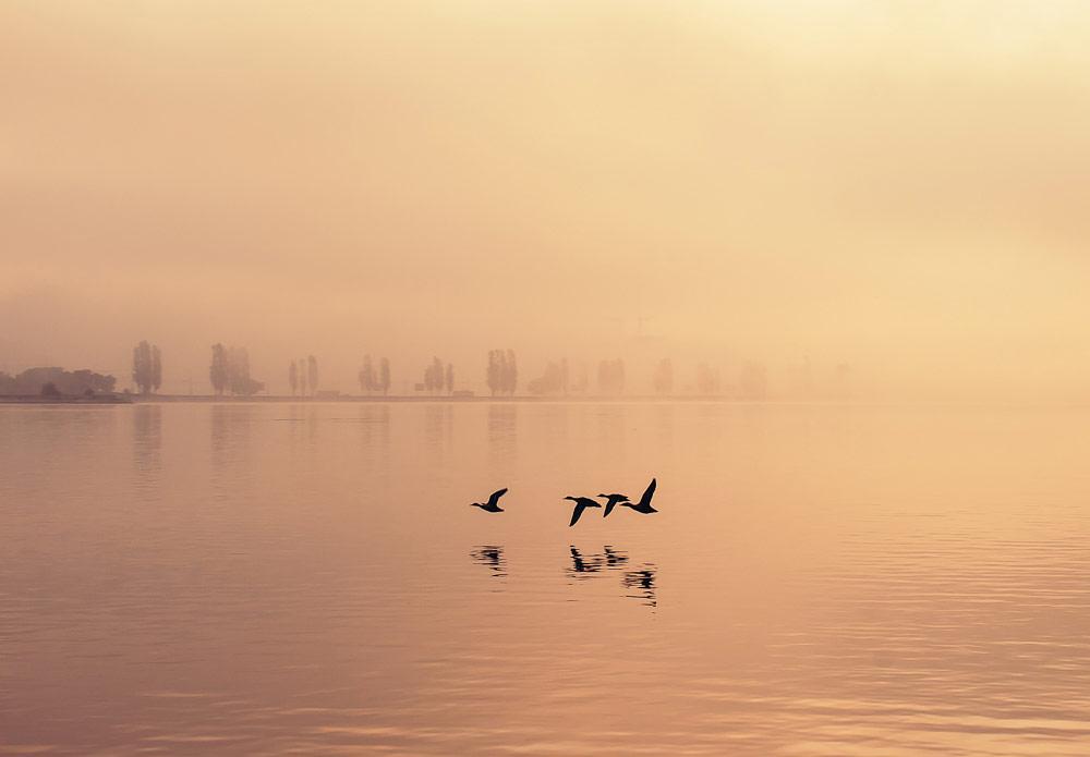 Туманный полет, © Миленин Роман, Фотоконкурс «Стихии науки»