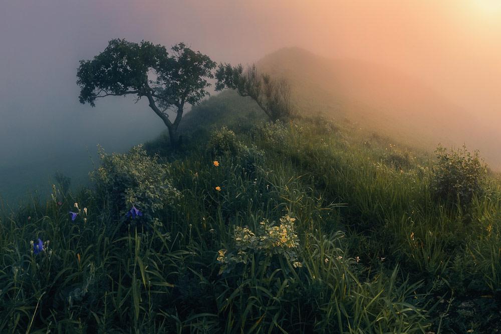 Сказки утреннего тумана, © Кровлин Андрей, Фотоконкурс «Стихии науки»