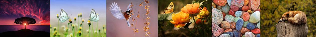 Конкурс фотографий природы
