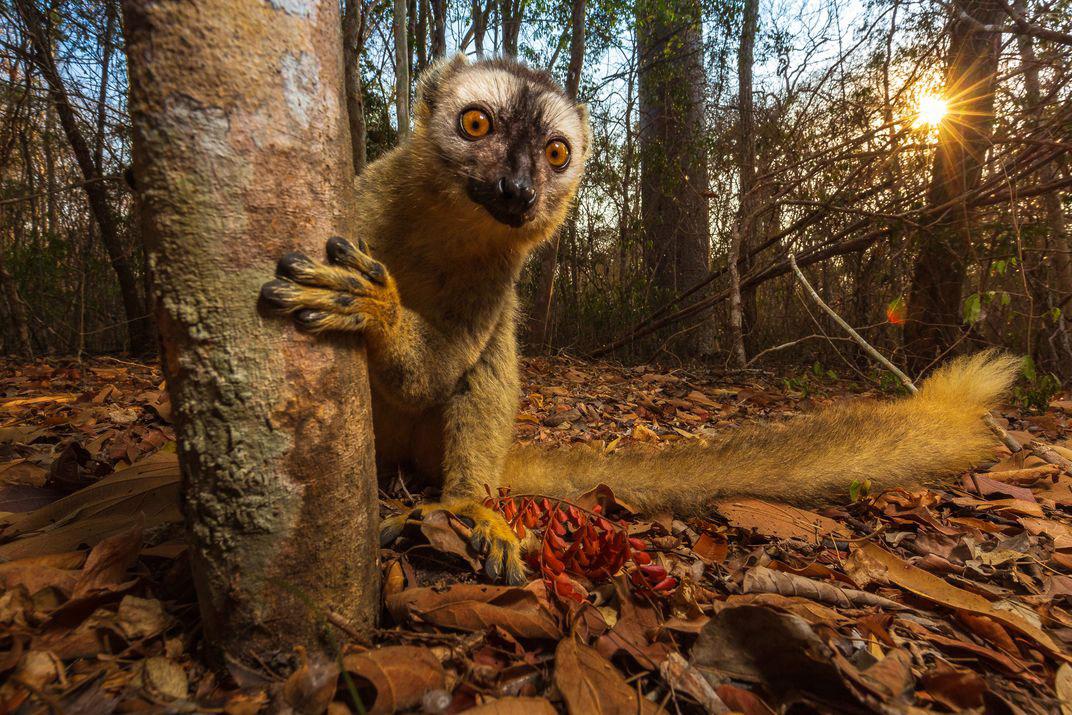© Ануруп Кришнан, Мир природы, Фотоконкурс Smithsonian