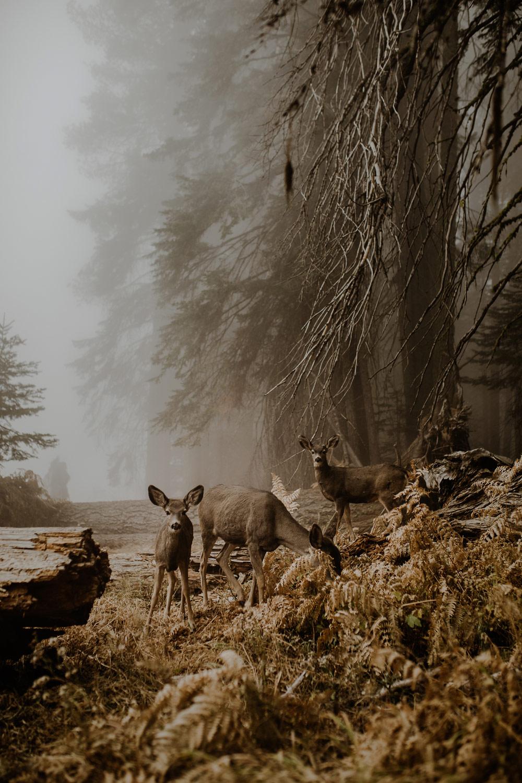 © Юстина Здунчик, Польша, Победитель категории «Живая природа», открытый конкурс, Sony World Photography Awards