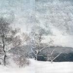 Белое контаминация, © Флориан Руис, 1 место, категория «Креатив», профессионал, Фотоконкурс Sony World Photography Awards