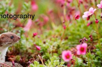Молодёжный фотоконкурс «Природа и дикая природа» от Sony World Photography Awards