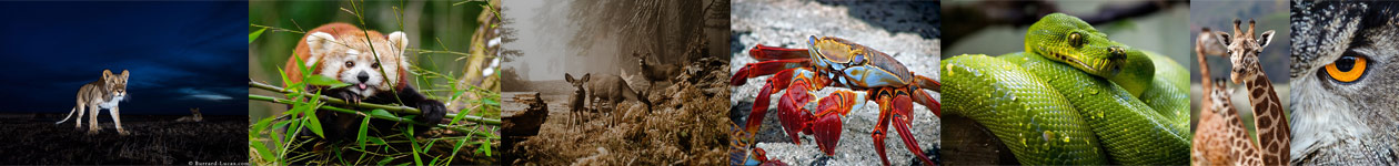 Молодёжный фотоконкурс «Дикая природа» от Sony World Photography Awards