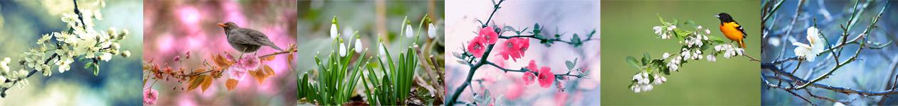 Фотоконкурс «Весна с воздухе» от BBC Discover Wildlife