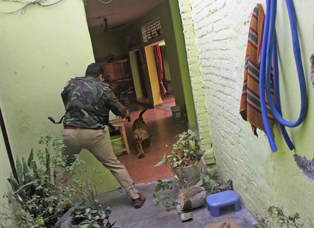 Я услышал, как подстреленный леопард зарычал от боли, © Аджей Кумар, Индия, 3-е место : Главные новости : Одиночные работы, Конкурс фотожурналистики имени Андрея Стенина