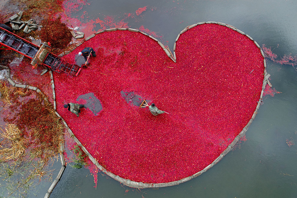 Клюквенное сердце, © Сергей Гапон, Беларусь, 1-е место : Моя планета : Одиночные работы, Конкурс фотожурналистики имени Андрея Стенина
