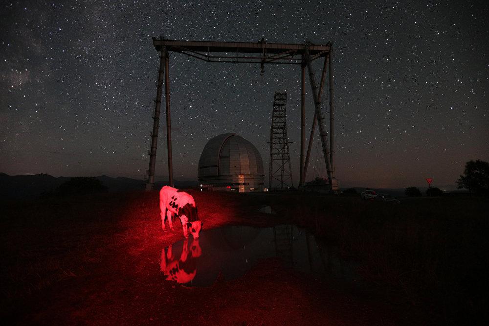 Красная корова, © Мария Плотникова, Россия, 2-е место : Моя планета : Одиночные работы, Конкурс фотожурналистики имени Андрея Стенина