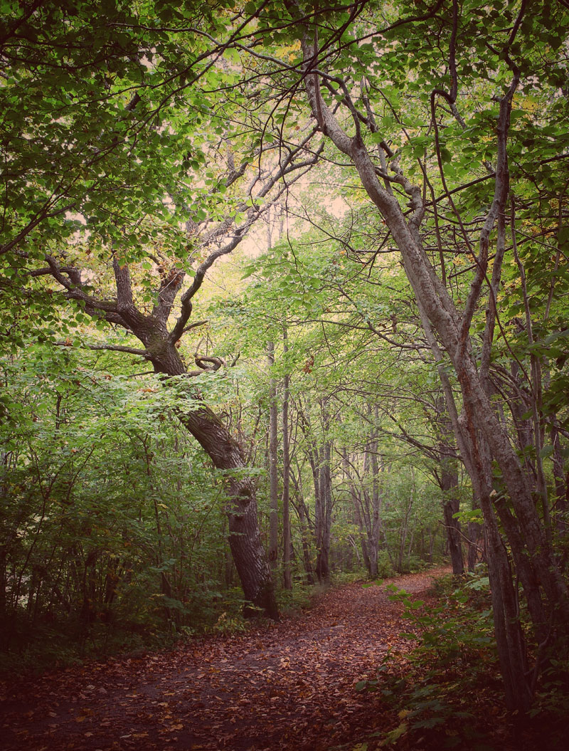 Священный лес в Мурасте, © Куно Таберланд, Деревня Мурасте, приход Кейла, Харьюмаа, Эстония, Священная роща, Фотоконкурс «Священные рощи»