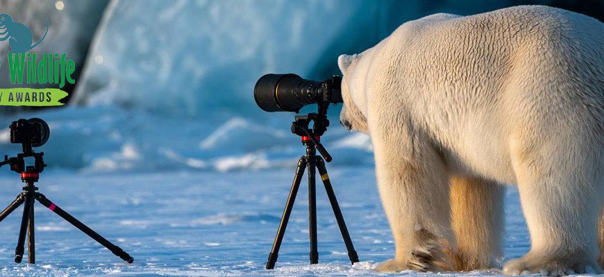 Фотоконкурс забавной дикой природы — Comedy Wildlife