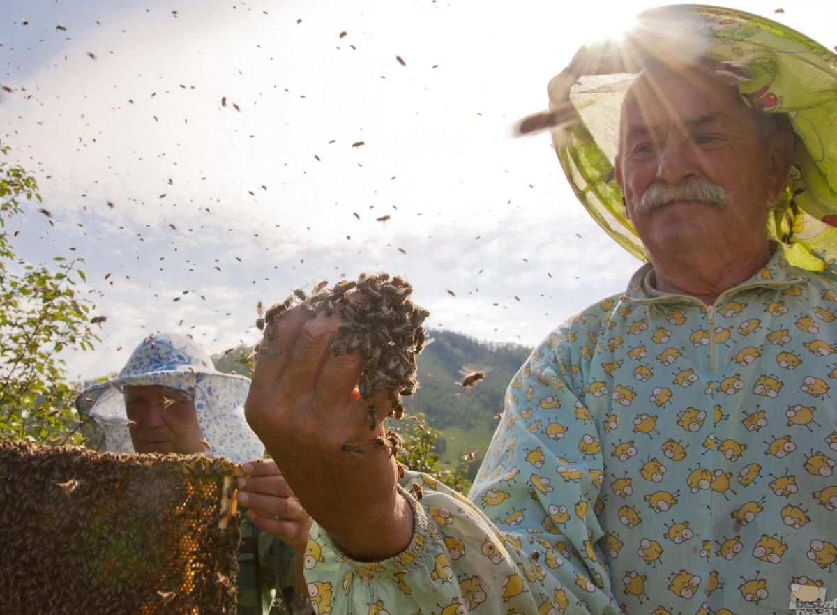 Пчелиная свадьба, © Александра Горбунова / Омск, Фотоконкурс The Best of Russia 2017