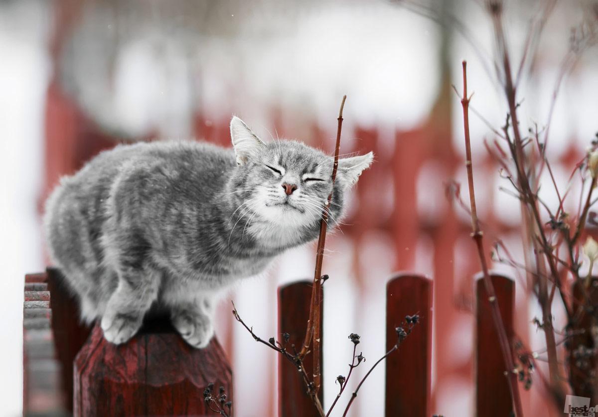 В воздухе запахло весной, © Наталья Бачкова / Москва, Фотоконкурс The Best of Russia 2017