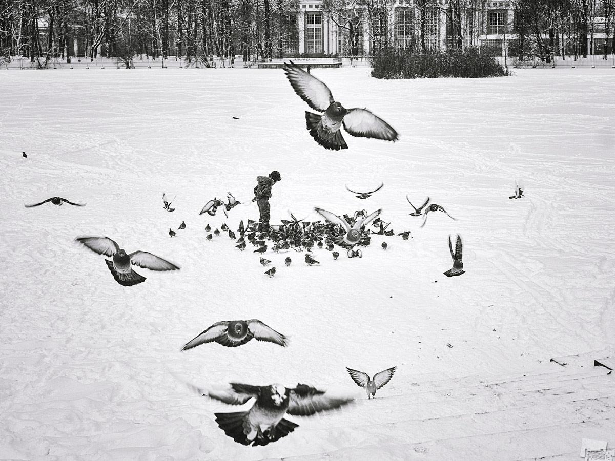 Как правильно кормить голубей, © Елизавета Вавилова / Санкт-Петербург, Фотоконкурс The Best of Russia 2017