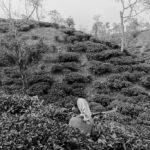 © Фахим Шариф, Новый взгляд, Конкурс документальной фотографии