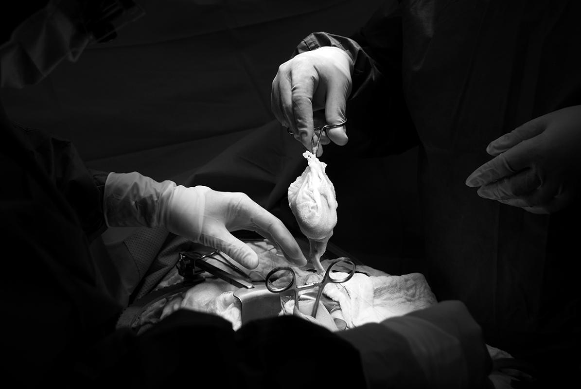 Трансплантация почки, © Мохамад Альхасель, Катар, 1-е место в категории «Наука», профессионал, Токийский фотоконкурс 2018 — TIFA