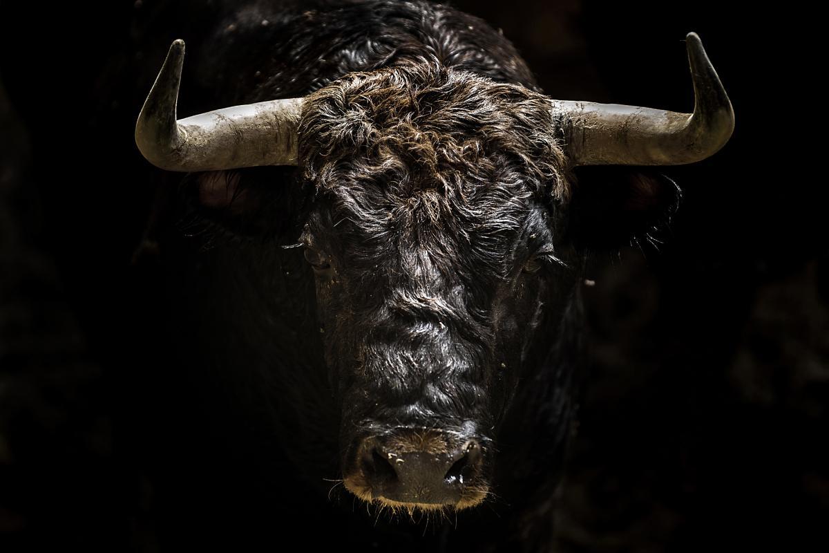 Испанский бой быков, © Хорди Коэн, 1-е место в категории «События», любитель, Токийский международный фотоконкурс 2018 — TIFA
