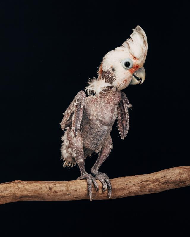 Земной (портретная серия «Пленённые птицы»), © Оливер Регейро, США, 1-е место в категории «Природа», любитель, Токийский международный фотоконкурс 2018 — TIFA