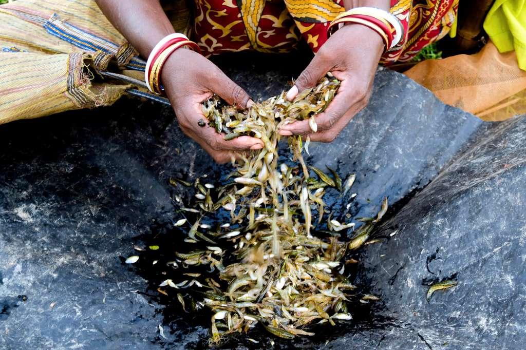 © Суджит-Саха, Индия, Фотоконкурс «Трансверсальность. Фотография без границ»