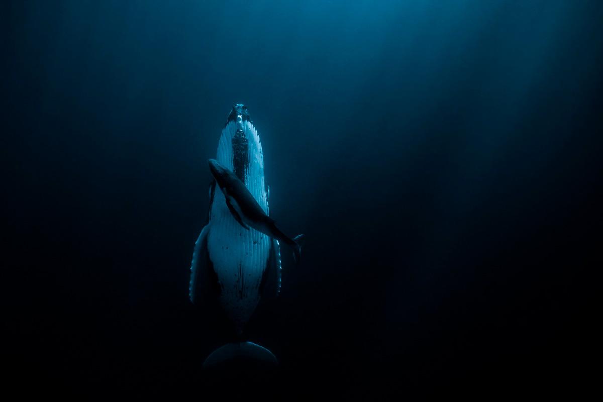 © Жасмин Кэри - Австралия