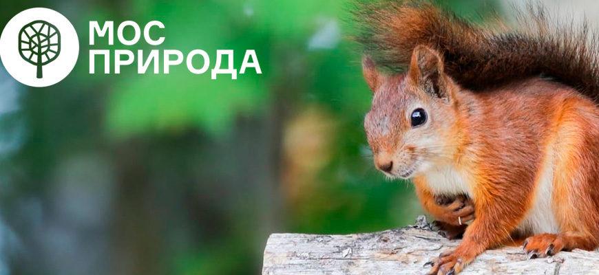 Фотоконкурс «Ушан, жулан и кошачья лапка» от Мосприроды