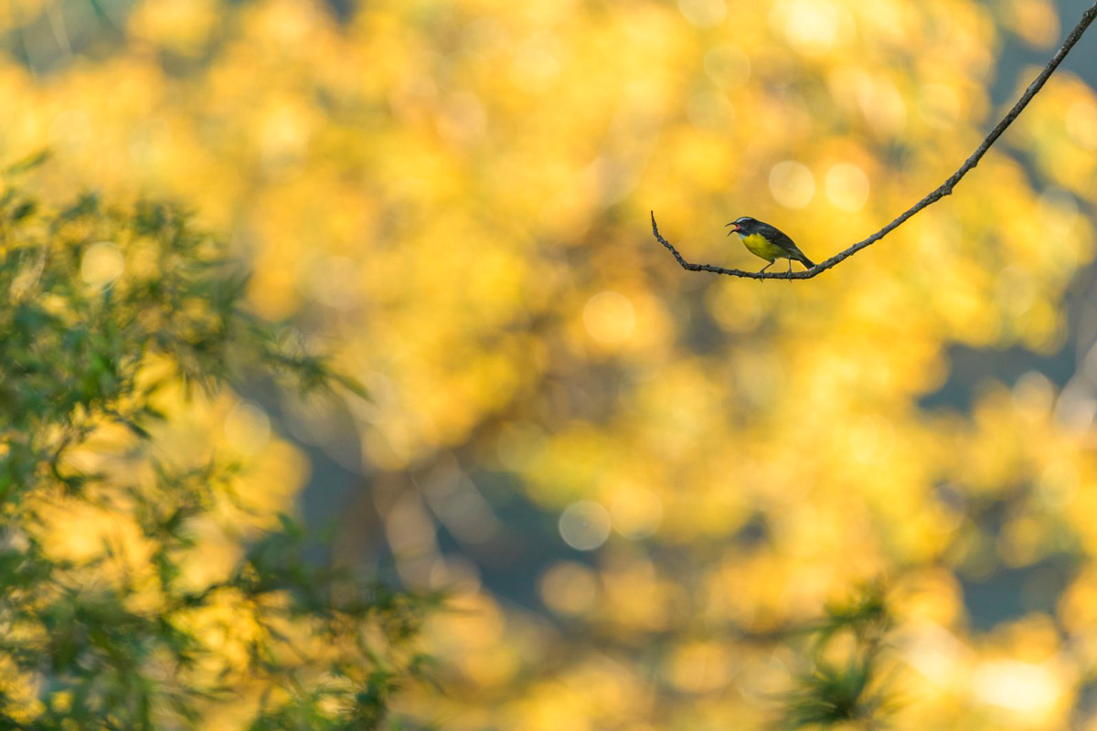 """Оттенки желтого"", © Тео Тзелепоглу (Франция)"