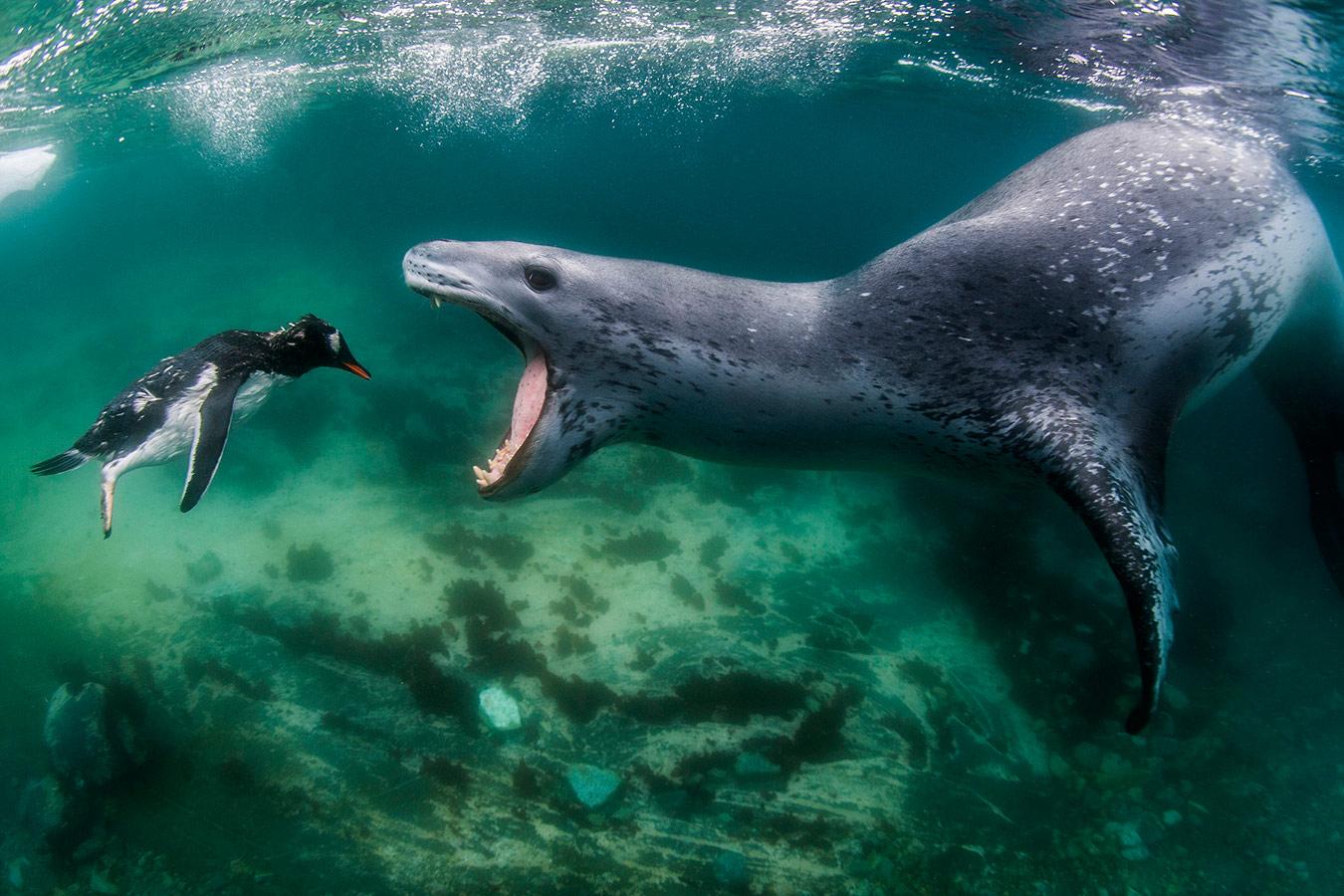 Лицом к реальности, © Амос Нахум, Пасифик-Гроув, США, Первое место в категории «Подводная» : профессионал, Фотоконкурс «Великие просторы» — пейзажи и живая природа — The Great Outdoors