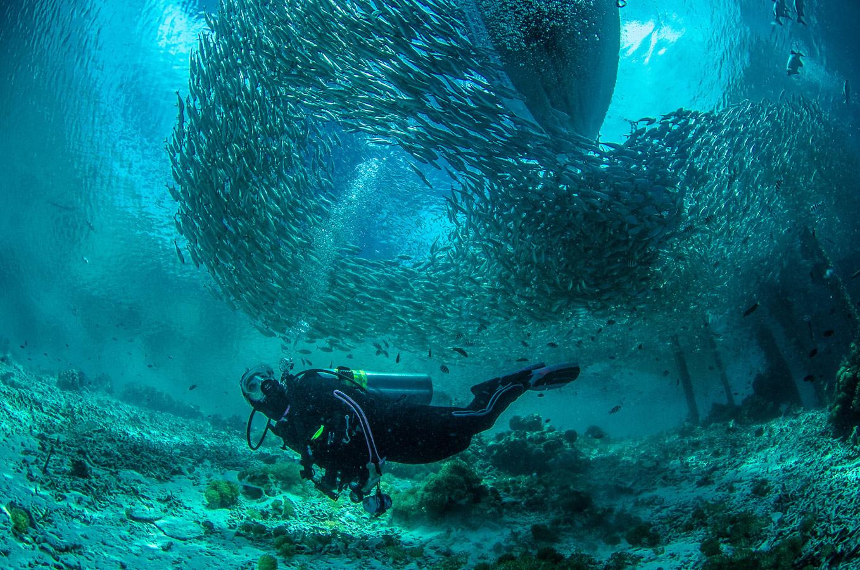 Подводный фотограф, © Норм Векслер, Амхерст, Массачусетс, США, Финалист категории «Подводная» : профессионал, Фотоконкурс «Великие просторы» — пейзажи и живая природа — The Great Outdoors