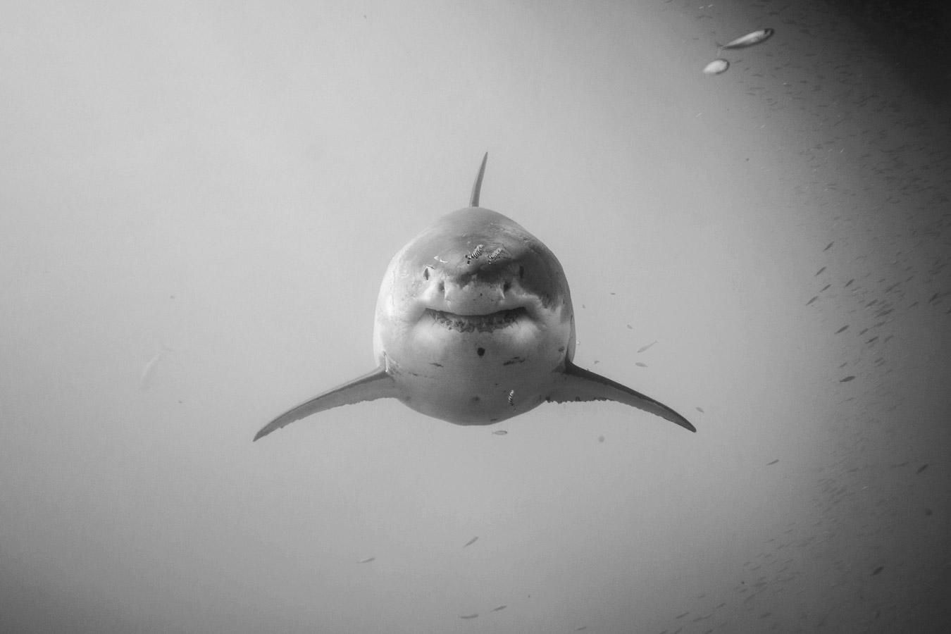 Её имя — Цицимитль, © Эшли Мовер, Санта-Барбара, Калифорния, США, Финалист категории «Подводная» : любитель, Фотоконкурс «Великие просторы» — пейзажи и живая природа — The Great Outdoors