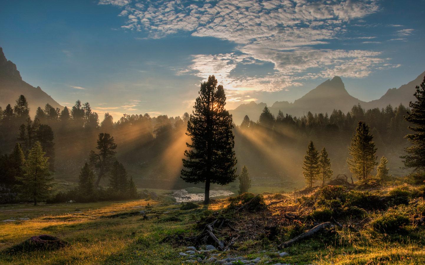 Утро дерева, © Том Шталь, Сан-Франциско, Калифорния, США, Финалист категории «Пейзажи» : любитель, Фотоконкурс «Великие просторы» — пейзажи и живая природа — The Great Outdoors