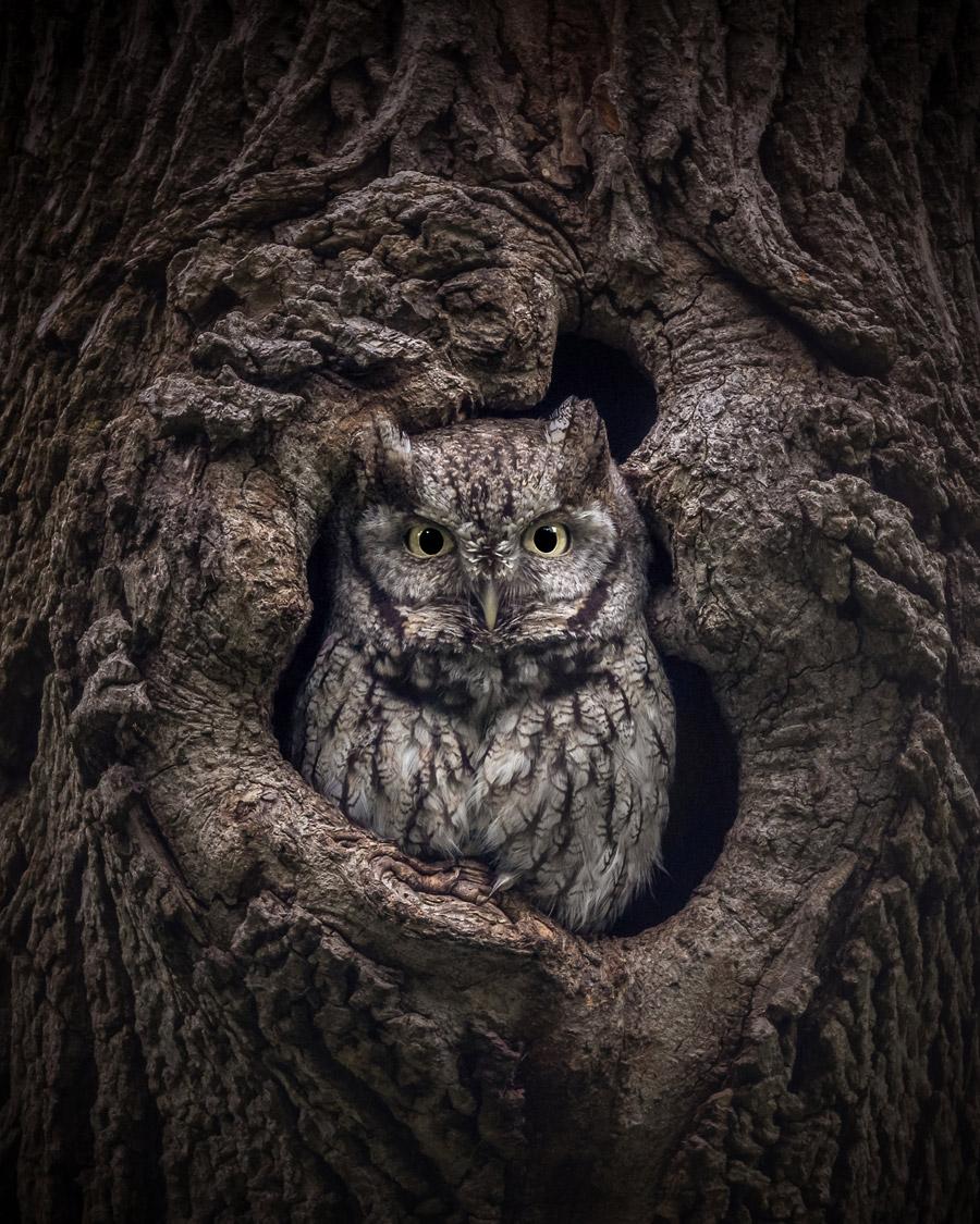 Мимолётный взгляд, © Джонатан Элькок, Ньютон, Массачусетс, США, Финалист категории «Живая природа» : любитель, Фотоконкурс «Великие просторы» — пейзажи и живая природа — The Great Outdoors